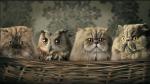 2015-03-11 owlcat